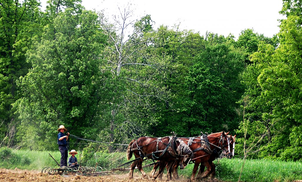 Amish boeren ramp voor milieu