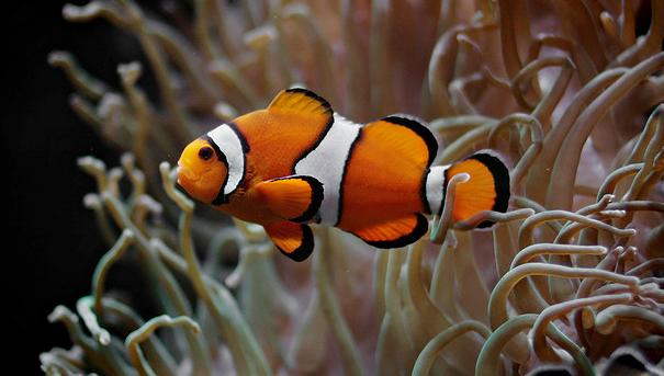 Vis past zich snel aan bij klimaatsverandering