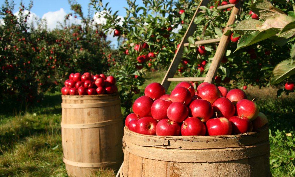 Een appel is goed voor de beestjes in je buik