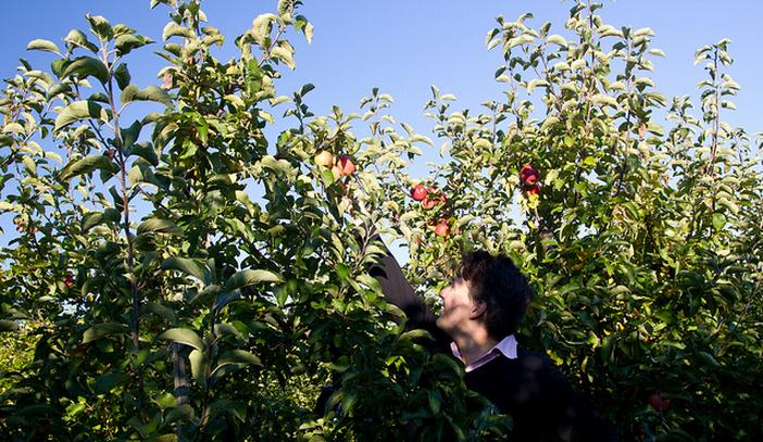 Een op de drie werknemers in Belgische agri is geen Belg