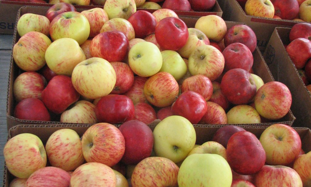 Productie appelmoes Voedselbanken mocht niet in natura betaald worden