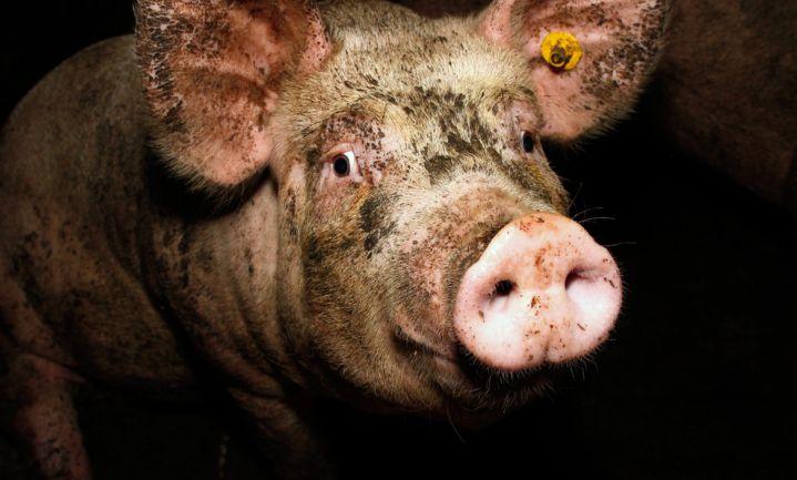 'Wreedheden in stallen Duitse boerenbestuurders'