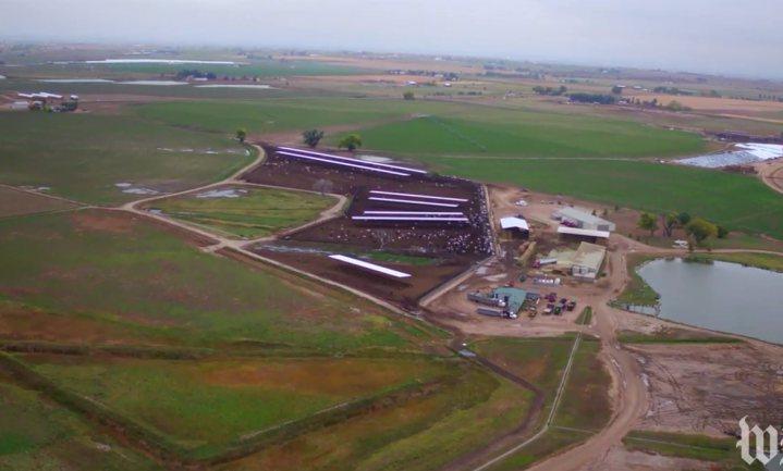 15 duizend melkkoeien en een plukje biologisch gras