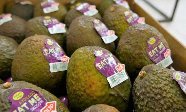 'Het hart van de Europese avocadomarkt ligt in Breda'