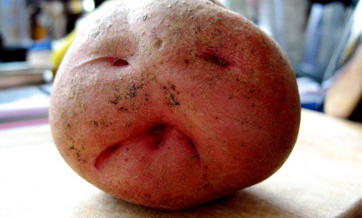 'Helft aardappeloogst verloren tussen veld en vork'