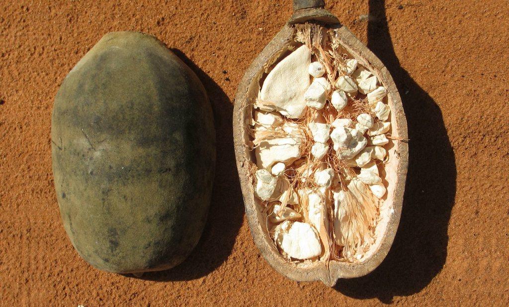 Culinair ontdekt: Baobab