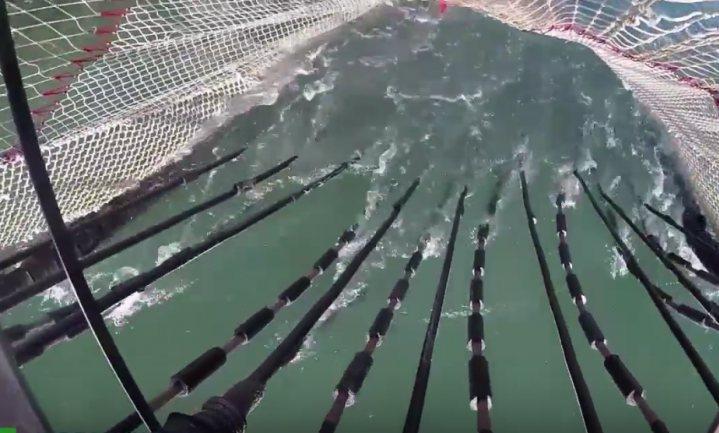 'Alle pulsvissers doen inmiddels mee met onderzoek'