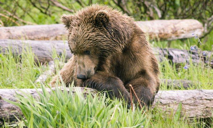 Beren werken als insecticide