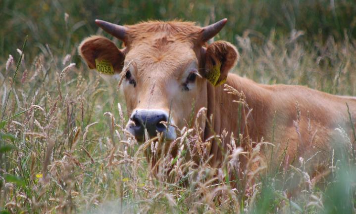 Nederlands NieuwVerse rundvlees: de 21 kandidaten