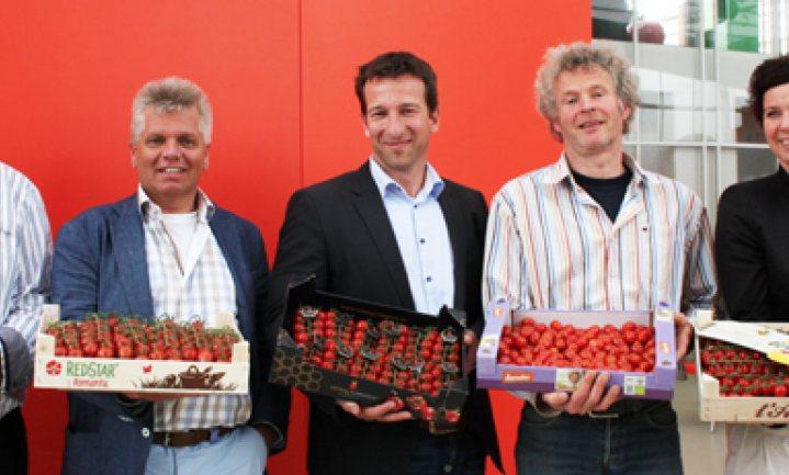 Honingtomaat dubbele winnaar Beste tomaat van NL