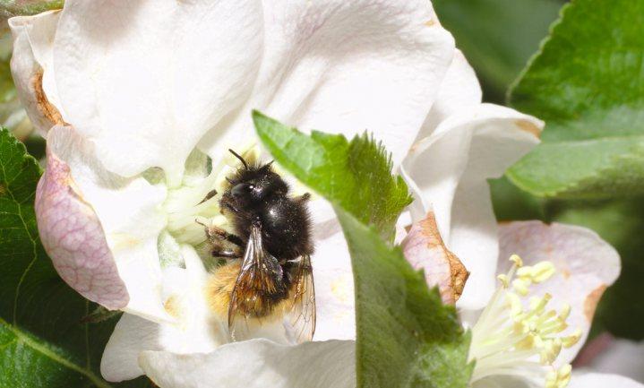 Supers pakken bijengif aan, boeren boos