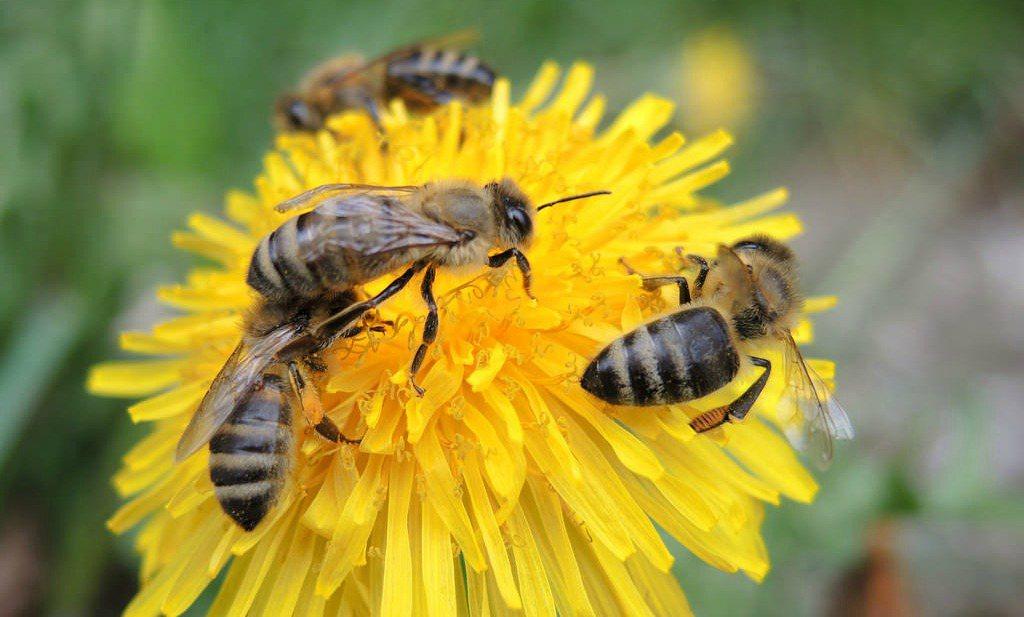 'Bloemranden ecologische val voor bijen'