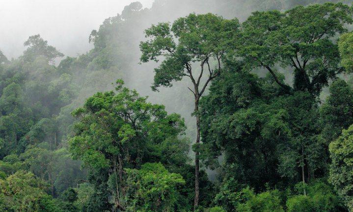 Klimaatverandering en landgebruik bedreigen 20% plantensoorten