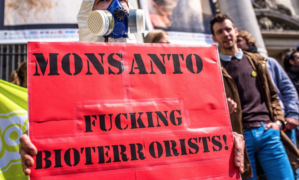 'GMO beestenvoer is wél veilig en voedzaam'