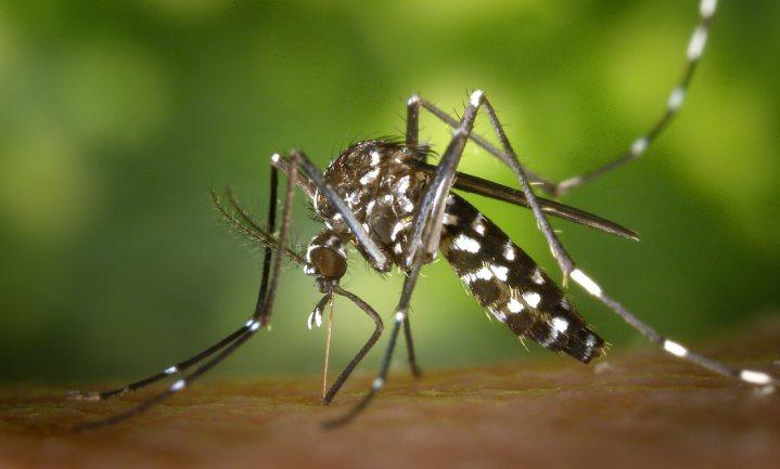 In stedelijke gebieden steken muggen liever mensen