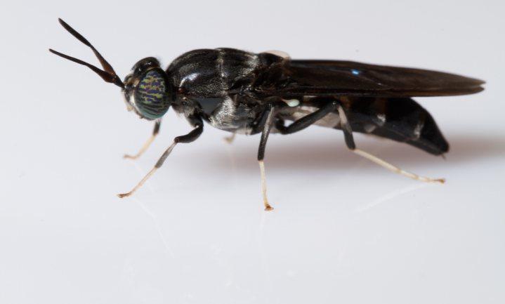 Veevoer makende insecten winnen prijs