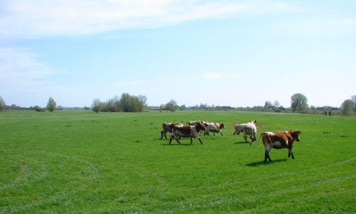 Europa acht fosfaatrechten Van Dam ongeoorloofde staatssteun