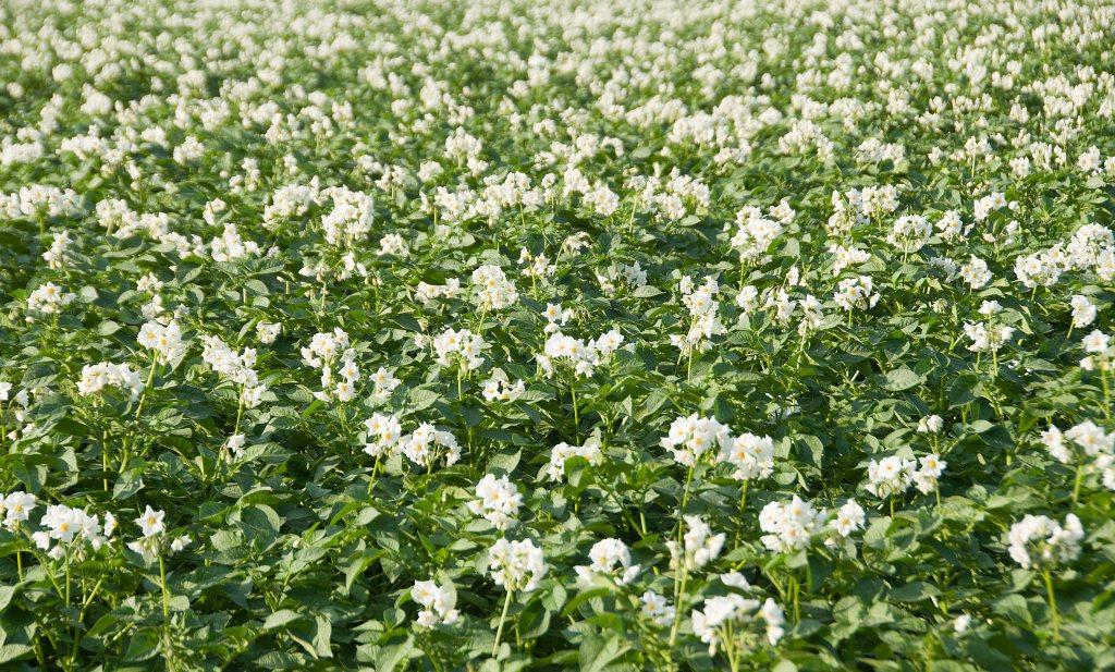 'Nederland kan gebruik landbouwgif halveren'