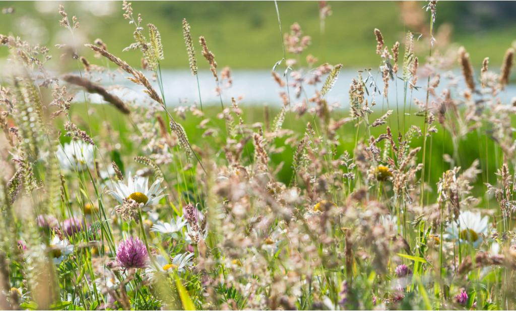 Minister Schouten stelt €2,5 miljoen beschikbaar voor biodiversiteitsonderzoek
