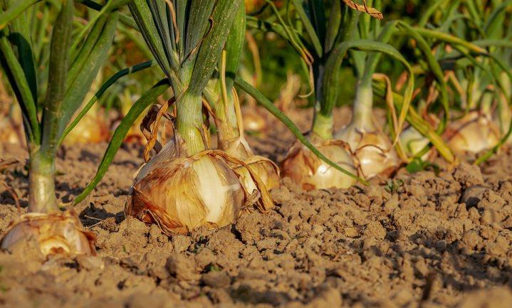 Nederlandse bodems prima geschikt voor landbouw en het kan nog beter