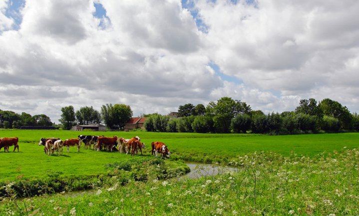 Een vijfde Nederlandse miljonairs is boer
