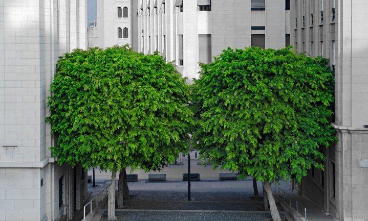 De boom als kapitaal op de stedelijke begroting