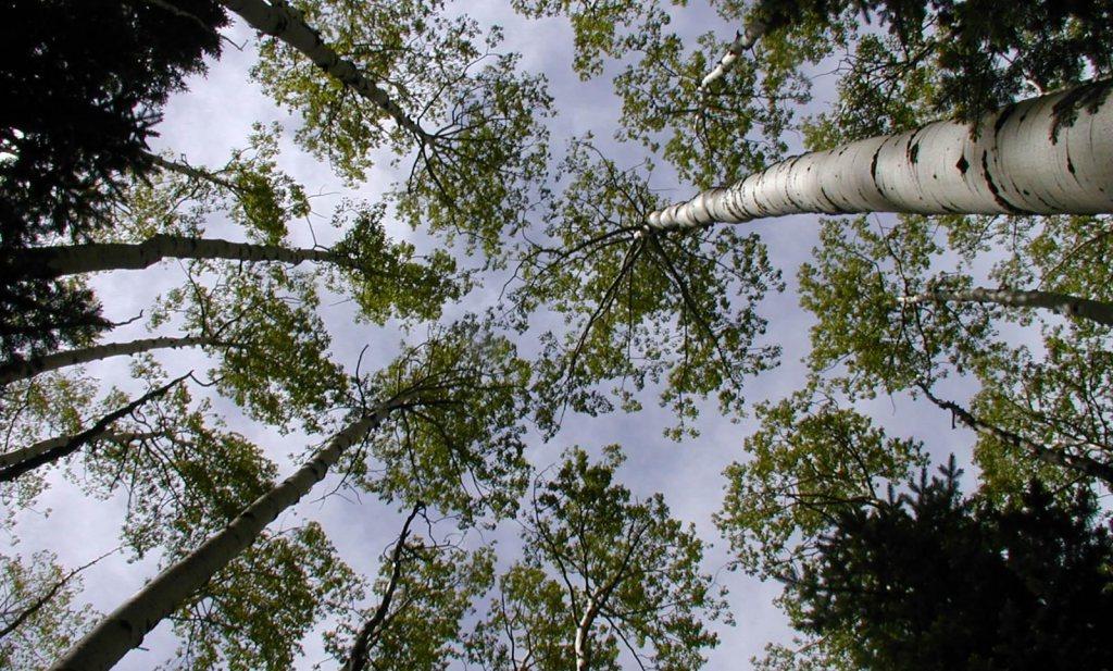 'Massale boomplant kan klimaatcrisis keren'