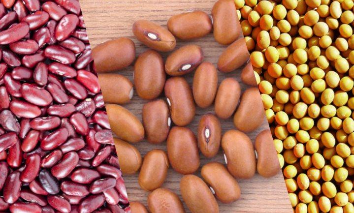Zeeuws-Vlaamse soja en kidney bonen volgen de bruine boon op