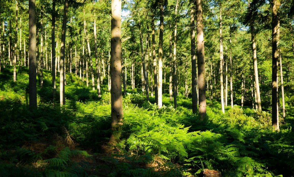Meer eetwissels, hitteprotocol tegen hittestress en gas geven en bomen planten in de VS