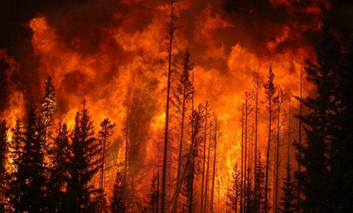 Oude volkeren beheerden natuur met vuur en dieren om grote branden te voorkomen