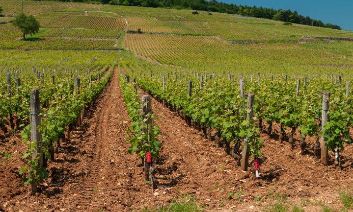 Steeds schaarsere Bourgogne prijst zich markt uit