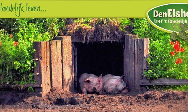 EZ, I&M en provincie N-Brabant steunen bos- en weidevarken met Green Deal
