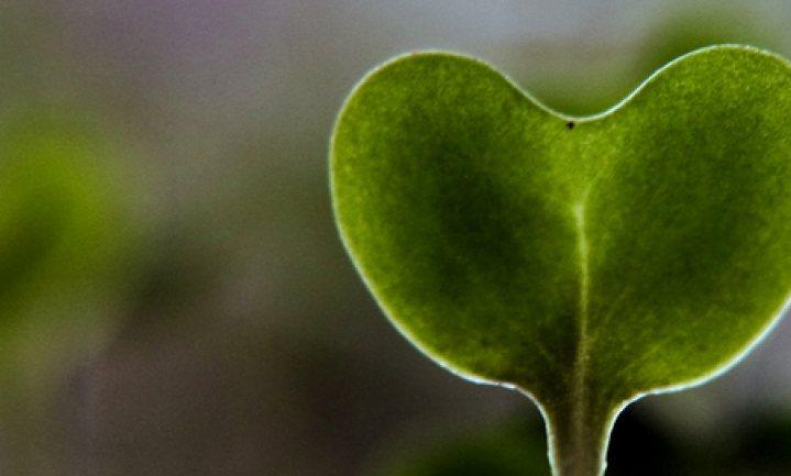 'Broccoli helpt tegen effect luchtvervuiling'