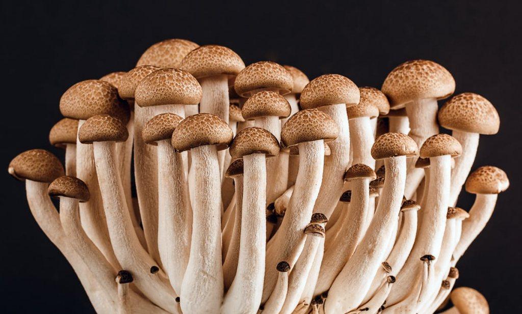 Miljarden overheidsgeld moeten burgers stimuleren bonen te eten en paddenstoelen