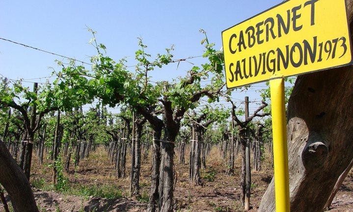 Slecht weer kost wijnbouw jaarlijks €10 miljard