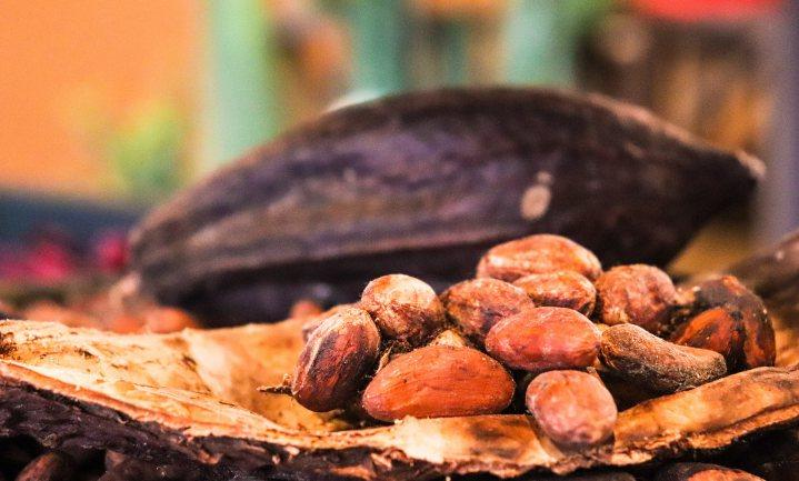 Na de bananenziekte loopt nu ook de cacaoboom gevaar door virus