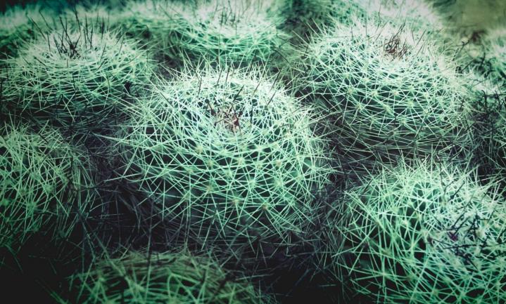 'Operatie Cactus' brengt illegale handel beschermde plant- en diersoorten aan het licht