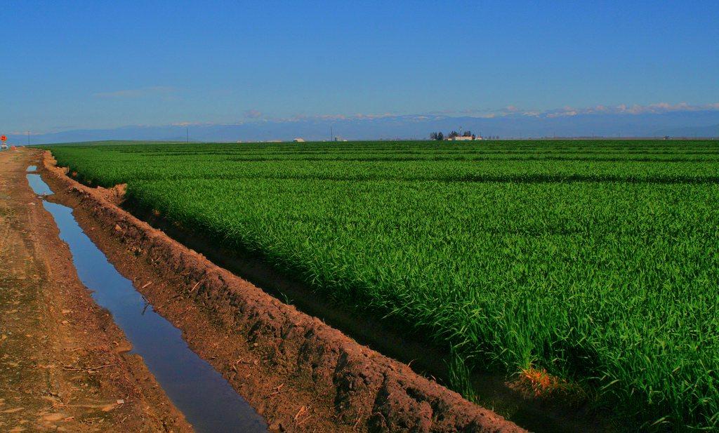 Californische boeren besparen vrijwillig water