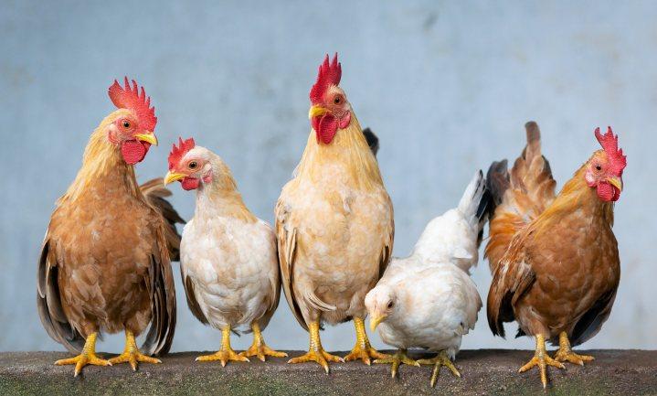 Benoem waarden en emoties als je het over duurzaamheid en dierenwelzijn wilt hebben