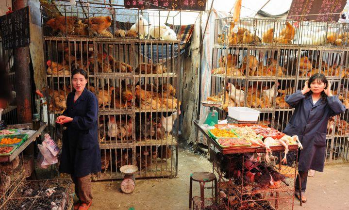 Chinese vogelmarkten sluiten vanwege H7N9