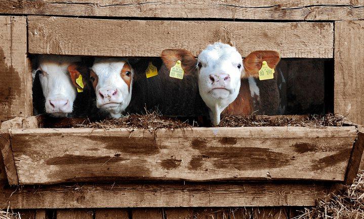 De boerderij voorbij: minder biedt meer perspectief