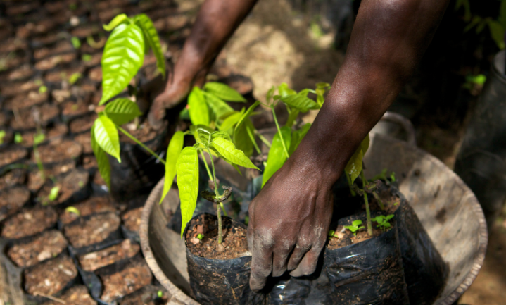 Mondelez: beter dan fair trade?