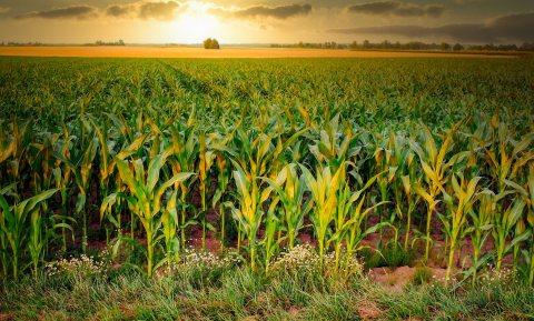 Wereldvoedselprijzen december op hoogste punt in 6 jaar, stijging zet in 2021 door