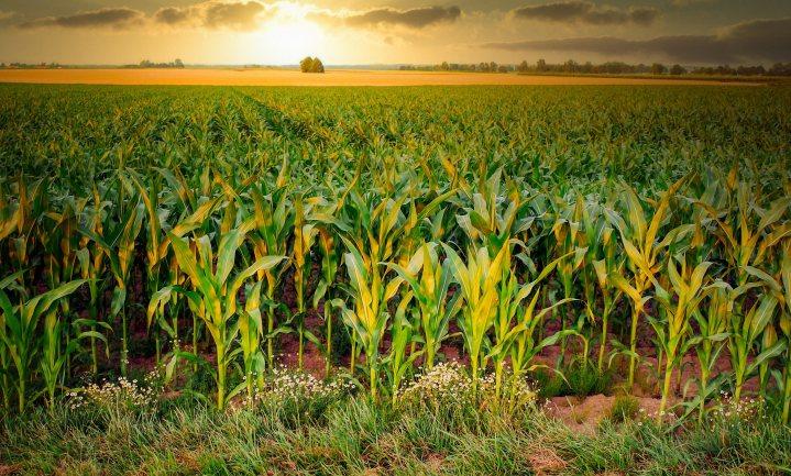 'Kringlooplandbouw reikt tot ver in Duitsland'