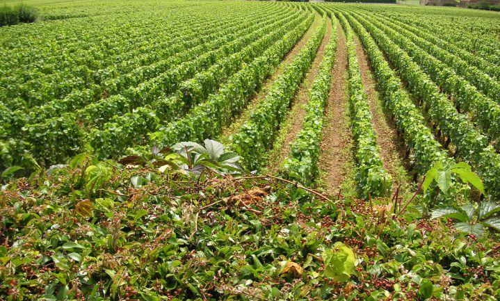 '€100 miljoen' voor wijngaard van 11 hectare