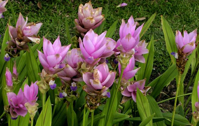TNO onderzoekt conservering door plantenextracten