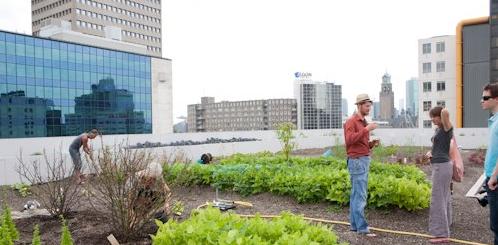 Stadslandbouw maakt slanker