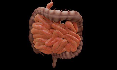 Groot onderzoek legt 'voor het eerst' sterke verbanden tussen darmbacteriën, voeding en gezondheid