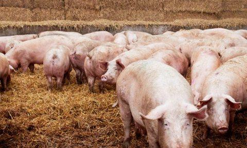 Neem wijziging Wet dieren serieus en maak veehouderij veel diervriendelijker