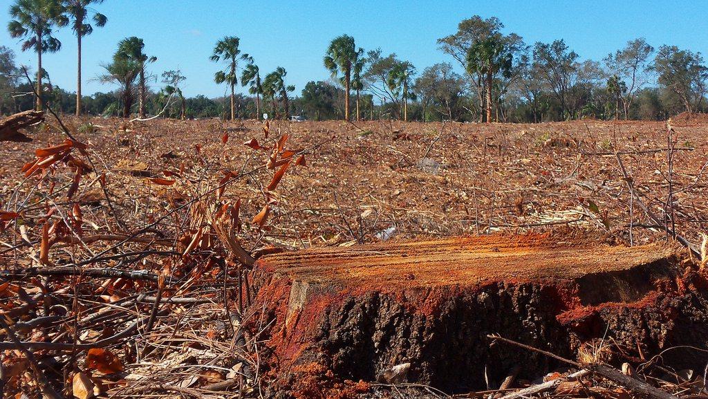 WNF maakt Nederland grote aanjager van ontbossing, enige nuance is geboden